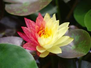 Image Courtesy of Sociedad Argentina de Horticultura