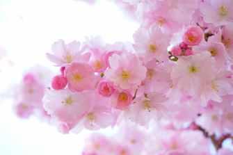 road flowers spring tree