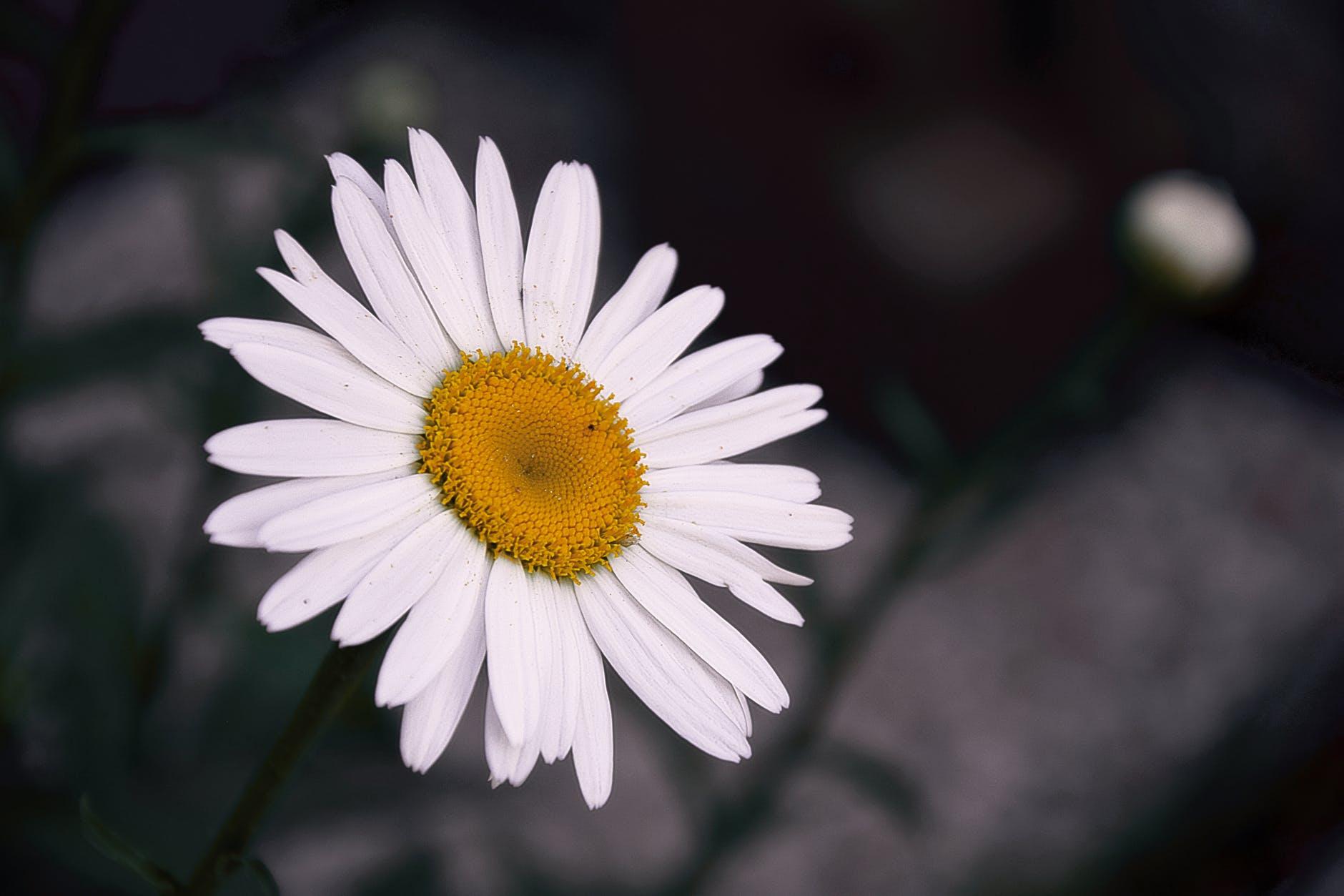 nature petals flower outdoors