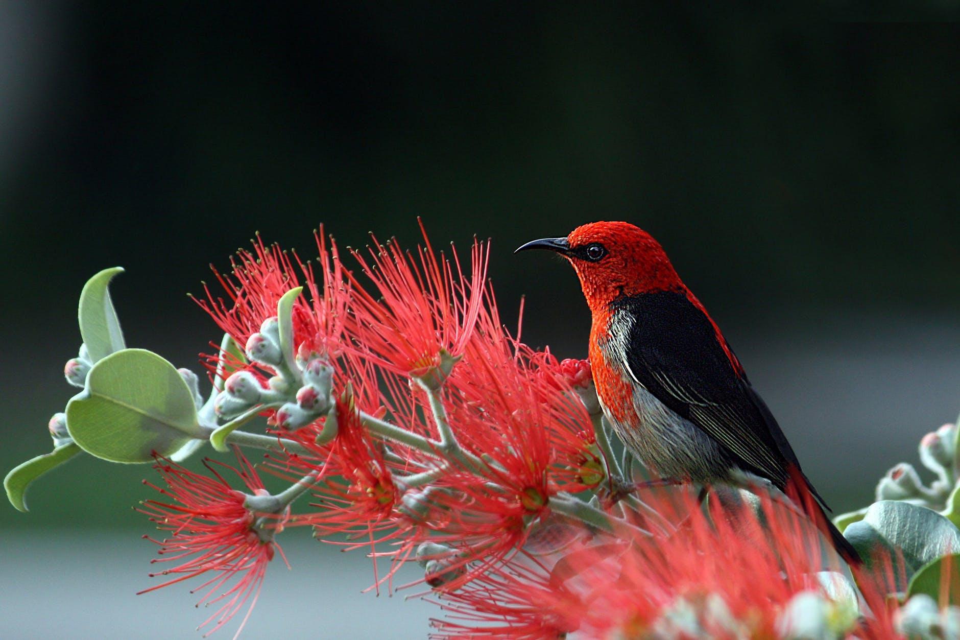 nature bird red wildlife